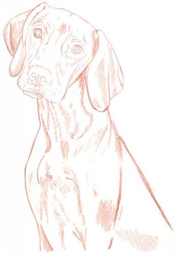 Hund zeichnen: Schritt für Schritt Tutorial - Schritt 4