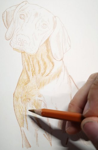 Hund zeichnen: Buntstiftkolorierung - So geht's!
