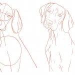 Hund zeichnen: Schritt für Schritt Tutorial